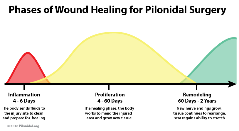 stages_of_wound_healing